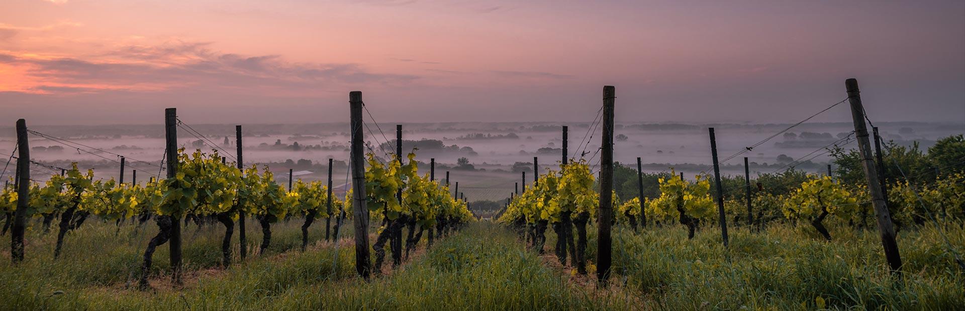 home_wine2_portfoliodetails3